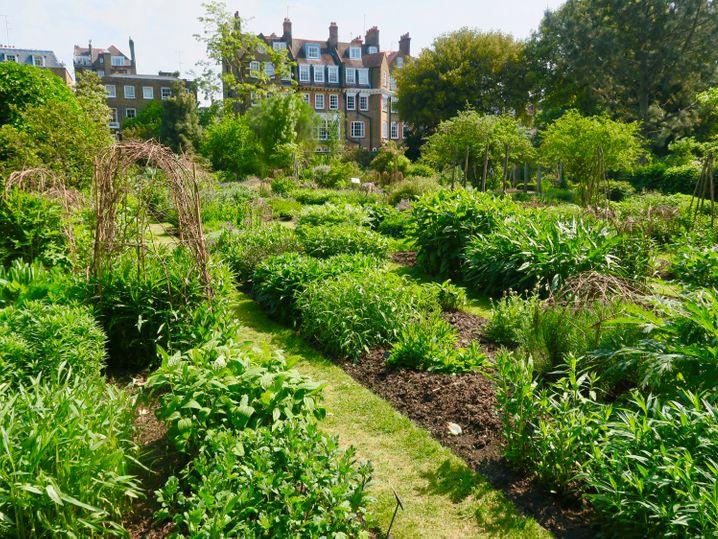 Versteckt zwischen Wohnhäusern liegt der Chelsea Physic Garden in London. Hier herrscht ein mildes Mikroklima, in dem etwa Grapefruits gut gedeihen.