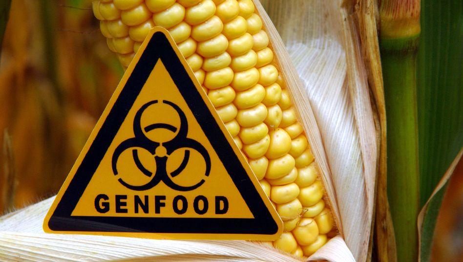 Genetisch veränderter Maiskolben: Auch mit den neuen genetischen Verfahren wie CRISPR oder Mutagenese veränderte Lebensmittel müssen gekennzeichnet werden