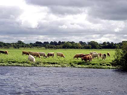 Grüne Wiesen: Die irische Landschaft zieht an den Bootsfahrern vorbei