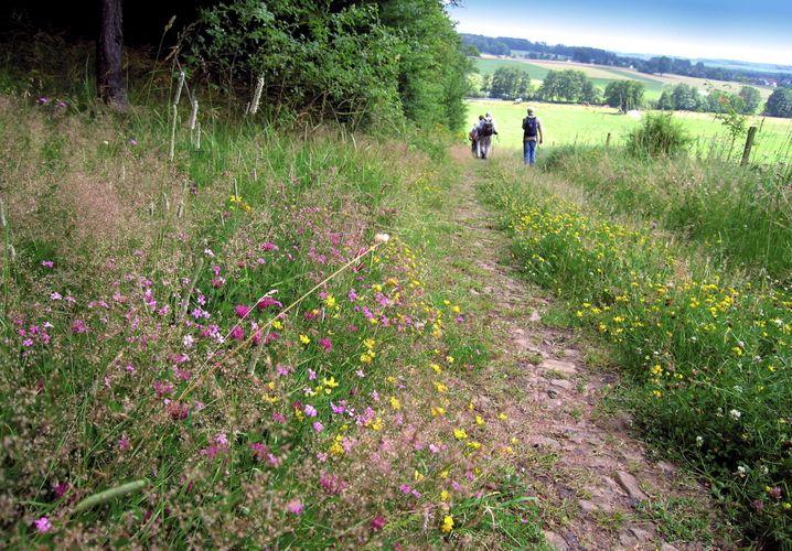 Wild und ursprünglich ist die Natur in der Vulkanregion Vogelsberg - perfekt für eine kleine Wandertour.