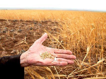 Magere Ernten, erhöhte Nachfrage: Die weltweite Versorgungslücke wird in den nächsten Jahren noch steigen
