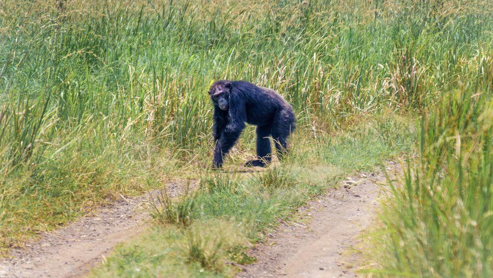 Queen-Elizabeth-Nationalpark: Naturtraum in Uganda