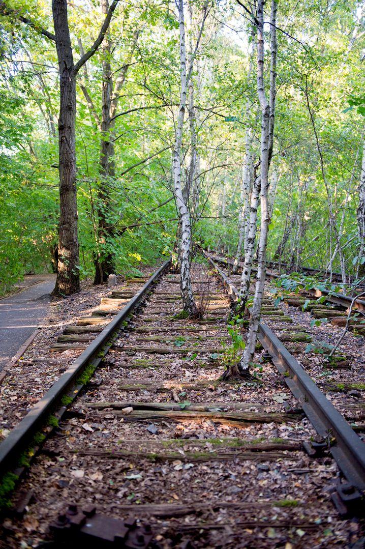 Oase in Berlin: Bäume wachsen durch alte Schienen im Natur-Park Schöneberger Südgelände.
