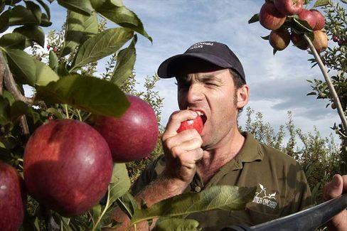 Alles frisch: Der Obsthändler Dole plant einen Börsengang