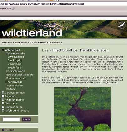 Brunft im Wohnzimmer: Auf Wildtierland.de gibt es dazu im September Live-Bilder