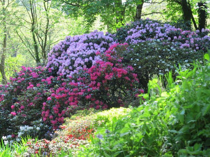 Klassisch schön: Blütenpracht im Landschaftspark Schloss Dennenlohe