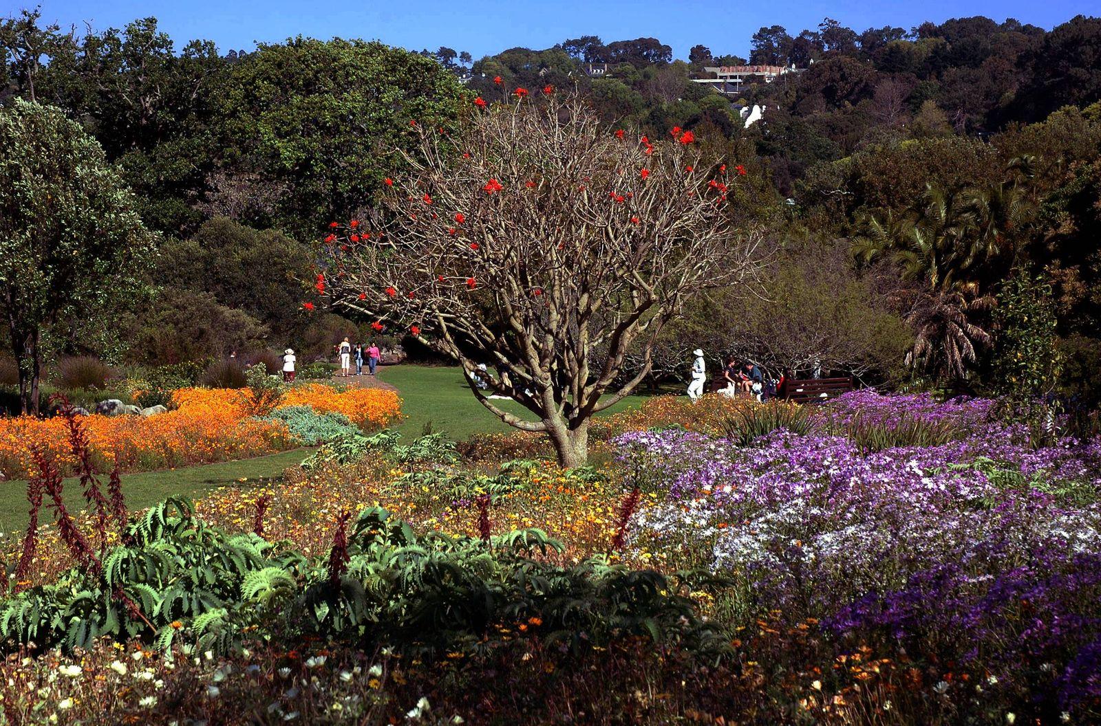 Kirstenbosch bei Kapstadt / Südafrika