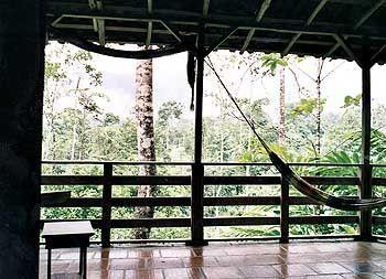 Logenplatz im Opernhaus des Dschungels