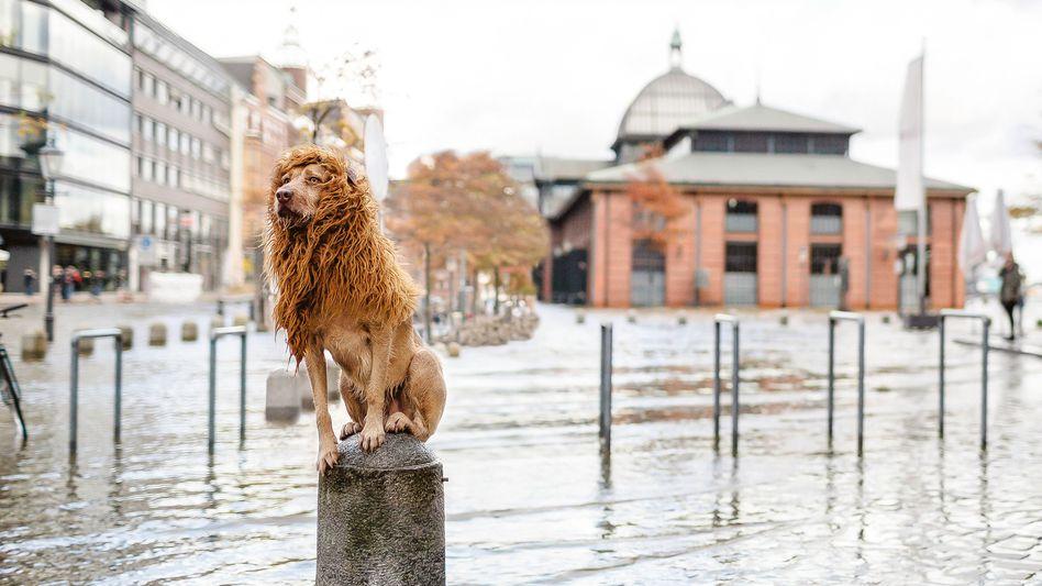 """Der ehemalige Straßenhund """"Tschikko"""" erkundet als """"Großstadtlöwe"""" mit Fotografin Julia Marie Werner seine neue Heimat Hamburg."""