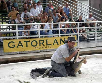 """It's showtime: Im """"Gatorland"""" reißen Männer den Reptilien den Rachen auf"""