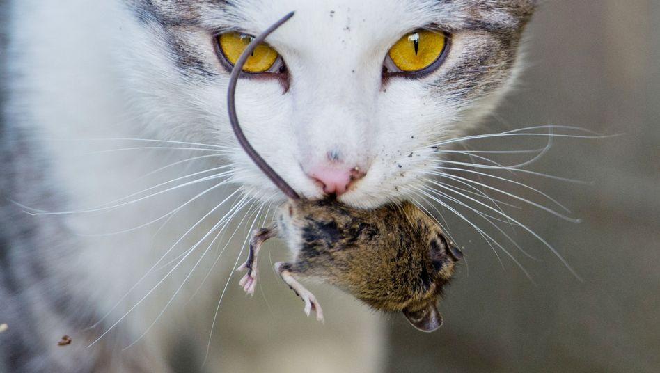 Diese Katze fängt sich ihre Mäuse noch selbst: Doch die meisten Heimtierhalter in Deutschland greifen für ihre Tiere tief in die Tasche