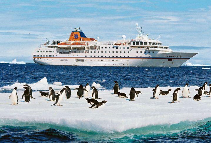Auf Beobachtungsposten: Wenn die Pinguine tanzen