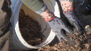 Naturschützer siedeln Ameisen auf Tesla-Fabrikgelände um