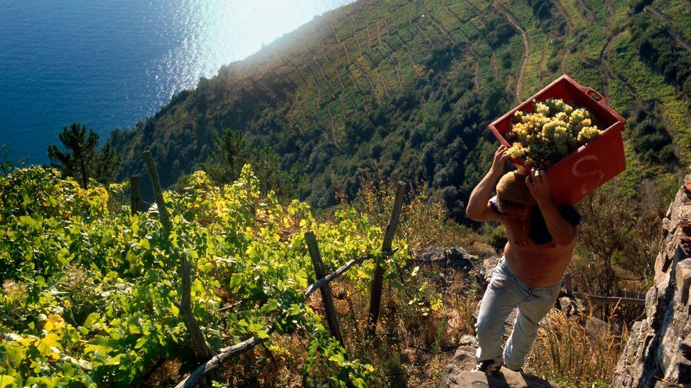 Cinque Terre: Hoch auf den Klippen, tief unter Wasser