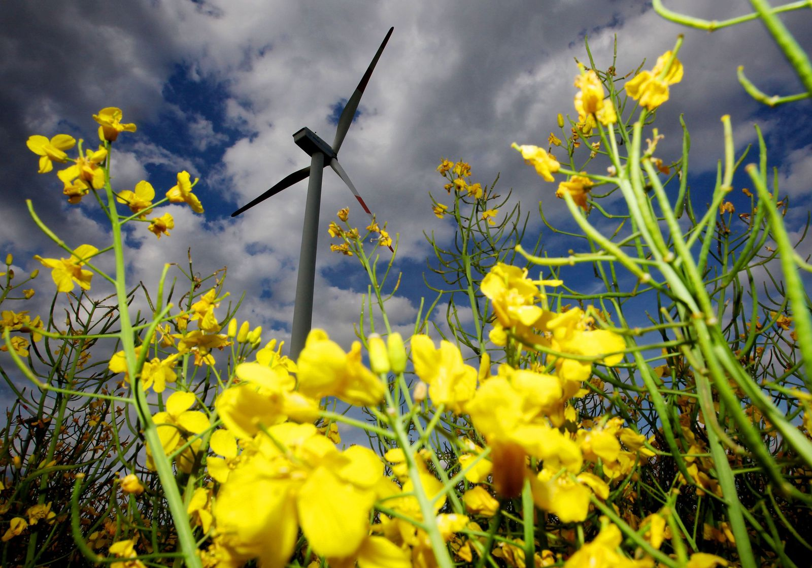 Windkraft in der Eifel / Windrad / Eindenergie / Erneuerbare Energien