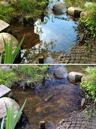 Weg mit den Reflexionen: Im oberen Motiv ist der Boden des Teichs kaum zu erkennen, im unteren dagegen schon. Dies liegt daran, dass für das untere Motiv ein Polfilter zu Hilfe genommen wurde, um die Spiegelungen des Wassers zu beseitigen