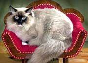 Fette Katzen: Wer verdient, was er kassiert - 120 Vorstände im Leistungstest