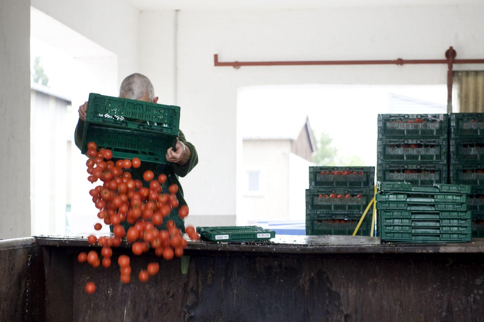 NICHT VERWENDEN EHEC-Krise / Tomaten