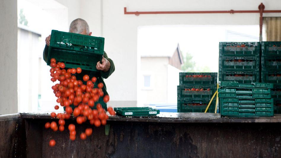 Bares Geld im Müll: Wegen der Ehec-Krise musste massenweise Gemüse entsorgt werden