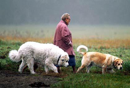 Im Ruhestand: Künftige Generationen dürften mit Bezügen ausschließlich aus der gesetzlichen Rentenversicherung kaum noch auskommen