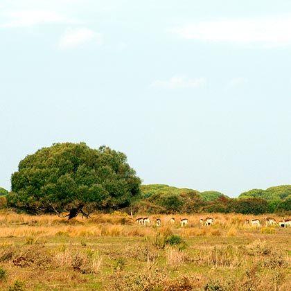 Fast wie in der afrikanischen Savanne: Der Coto de Doñana Nationalpark ist eines der bedeutendsten Feuchtgebiete weltweit