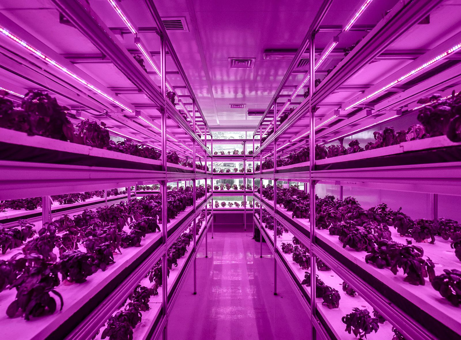 Operations At The High-Tech Indoor Cofco Wisdom Farm