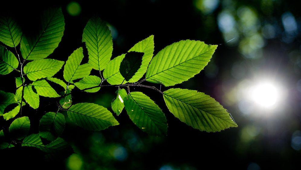 Bäume: Die Angepassten