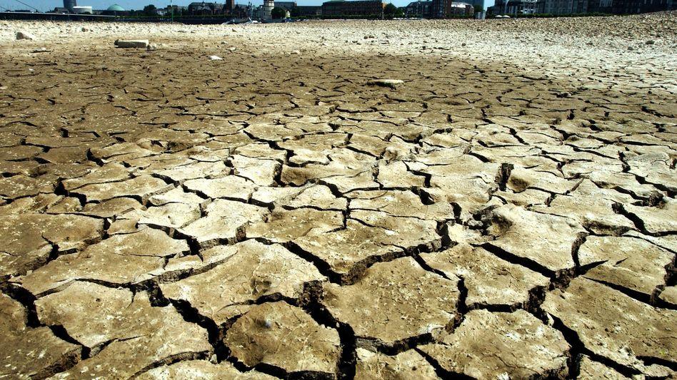 Hitzewelle: Wärmster Juli weltweit seit Beginn der Klima-Aufzeichnungen