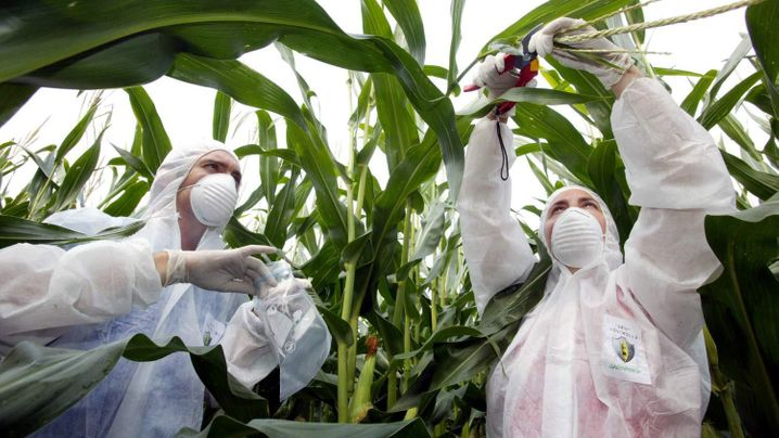 Bayer will Monsanto übernehmen: Die fünf zentralen Fragen zum Flirt der Chemie-Riesen