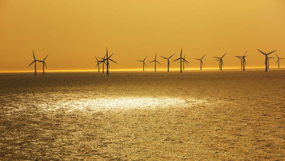 Raus aus dem Öl, rein in die Erneuerbaren: Offshore-Windpark vor der niederländischen Küste