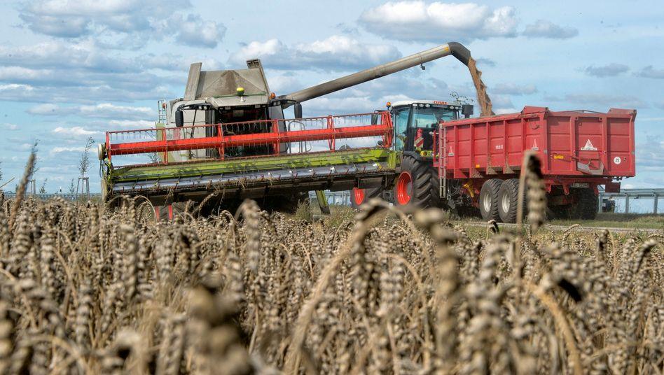 Gute Ernte: Trotz hoher Erträge in manchen Gegenden der Welt besteht Ernährungsproblem