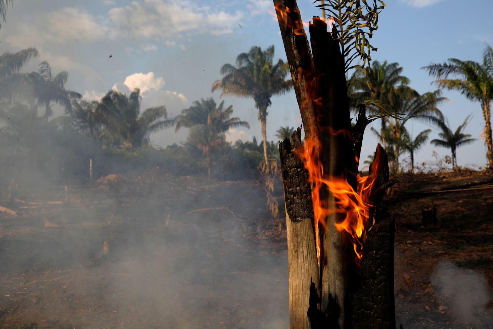 Brasilien/ Waldbrände