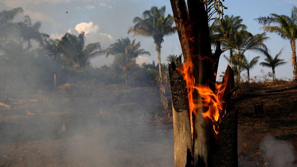 Waldbrand im Amazonas: Zünden ausgerechnet Umweltschutzverbände neuerdings den Regenwald an? Brasiliens Präsident glaubt offenbar daran