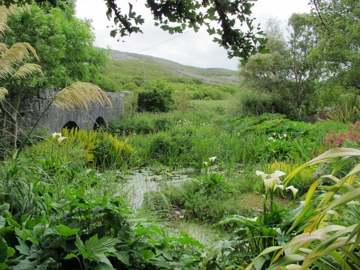 Der Caher Bridge Garden an der Westküste Irlands ist einem felsigen Boden abgetrotzt worden - und leuchtet heute in vielen Grüntönen