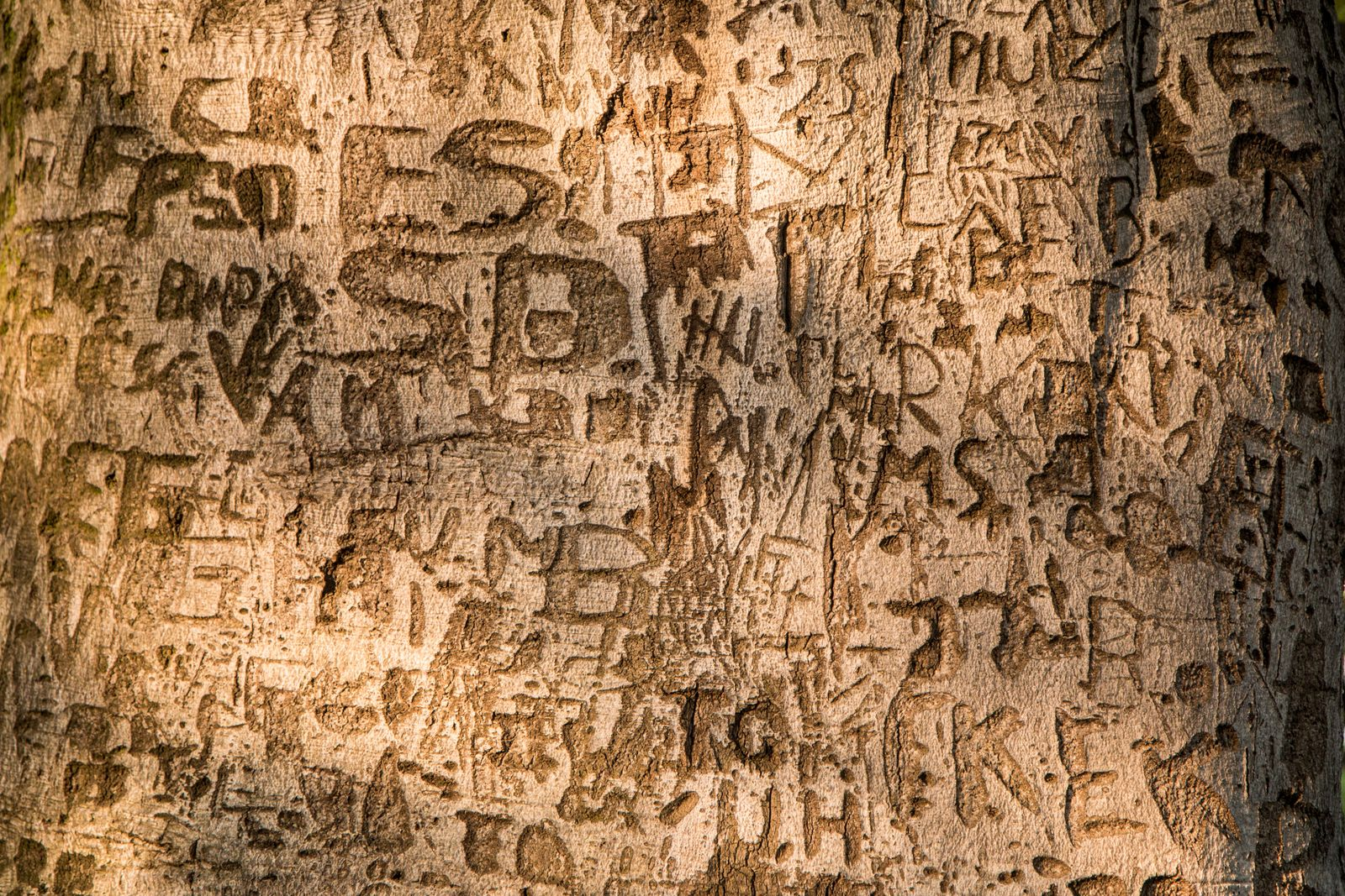 A detail picture of the carvings in a wooden bark. People are writing messages or names.