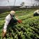 Nestlé will Milliarden in Klimaschutz investieren