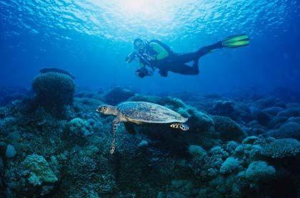 Erlebniswelt: Apo Riff - das größte atollartige Korallenriff der Philippinen