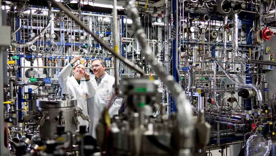 Produktionsplus aus dem Labor: BASF und Wintershall hoffen auf höhere Ölausbeute mit Hilfe des Pilzes Schizophyllum