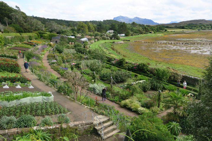 Unerwartete Pflanzenvielfalt: Die Gärten von Inverewe grenzen direkt an den Meeresarm Loch Ewe, dessen Uferboden bei Ebbe zum Teil trockenfällt.