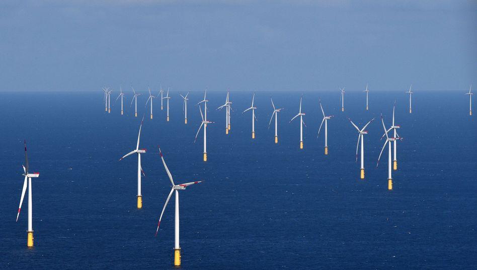 Windräderin der Nordsee: Die Windkraft - ob auf hoher See oder an Land - ist seit Jahren umstritten und Spielball der Politik. Insolvenzen wie die der Windenergiefirma Prokon zeigten, dass Vertrauen in die Windkraft riskant sein kann.