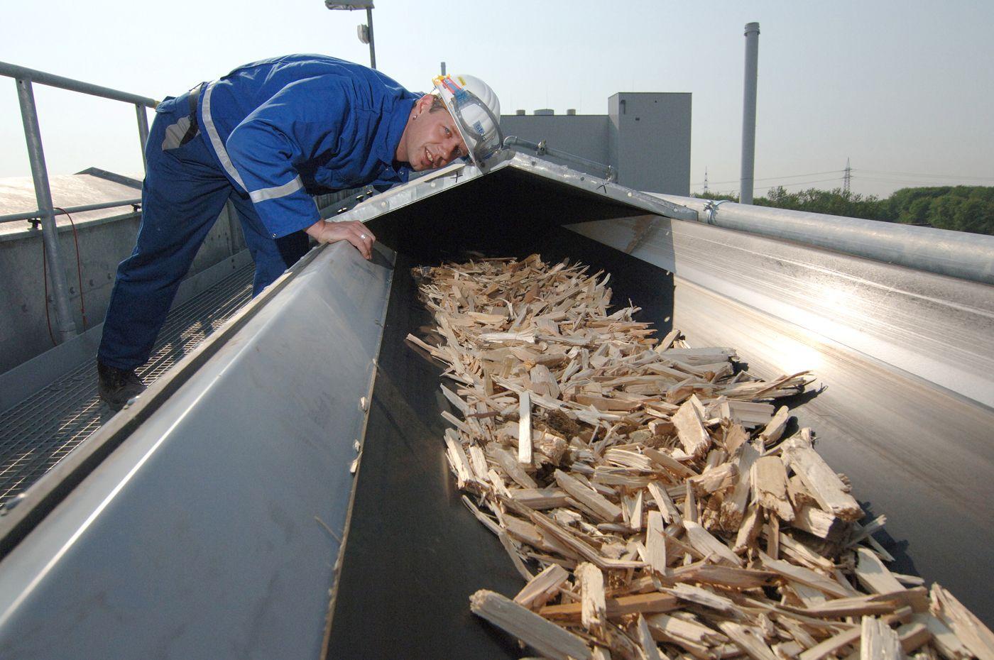 Biomasse / Energie / Rohstoff Holz / STEAG / Biotechnologie