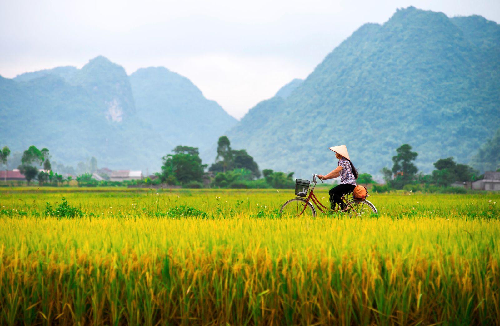 EINMALIGE VERWENDUNG Vietnamese woman and her ride in a valley