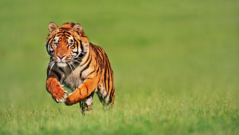 """Auf der Jagd: Reiche Investoren wollen ihr Geld vor Inflation schützen - und suchen nach Angaben des Reichen-Netzwerks """"Tiger 21"""" neue Anlageziele"""