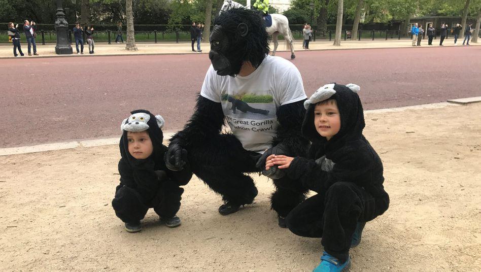 Eine Ausbildung in Gorilla-Kampftechnik macht sich schon mal nicht schlecht im Lebenslauf.