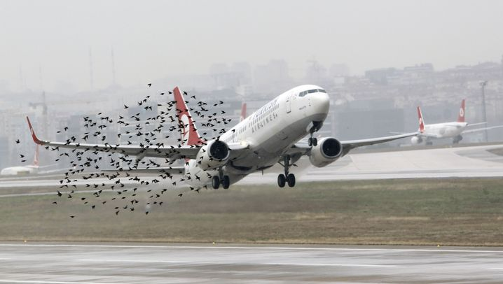 Die Apples von morgen: Turkish Airlines