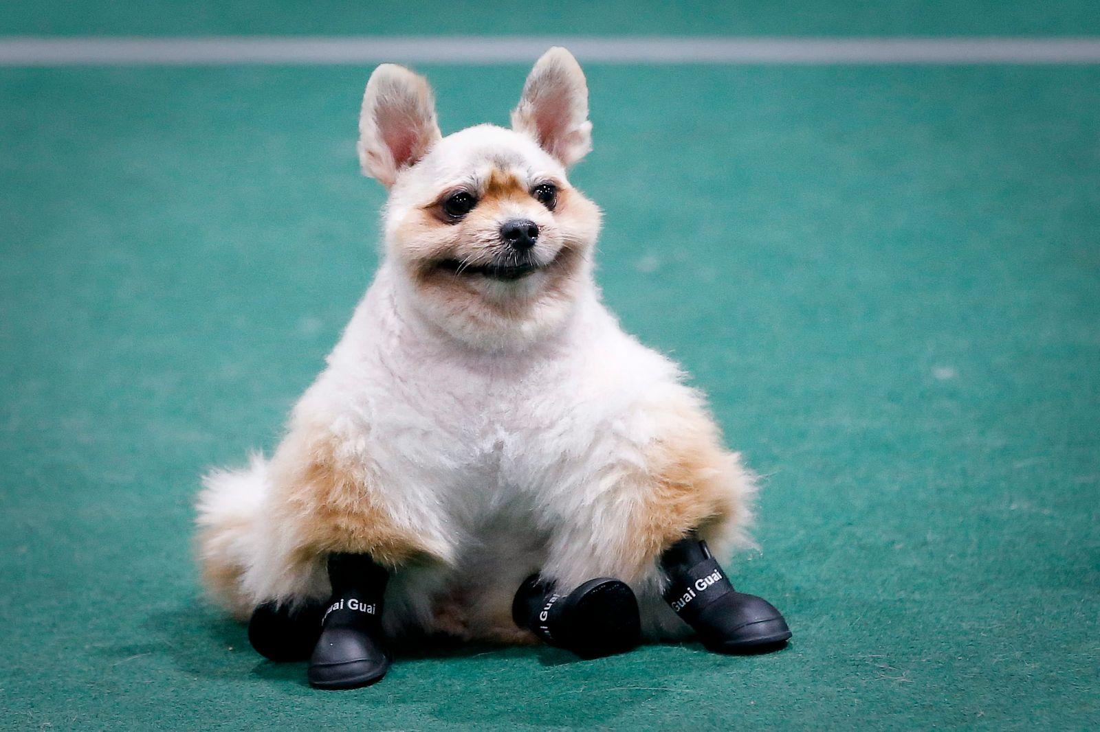 Hunde/ Übergewicht