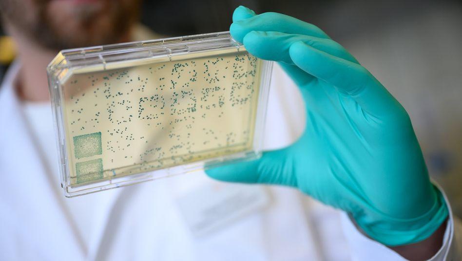 Suche nach dem Impfstoff: Biontech aus Mainz und Curevac aus Tübingen sind vorn dabei