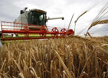 """""""Die EU-Agrarpolitik würde zusammenbrechen, wenn Abermillionen anatolische Bauern subventionsberechtigt würden."""""""