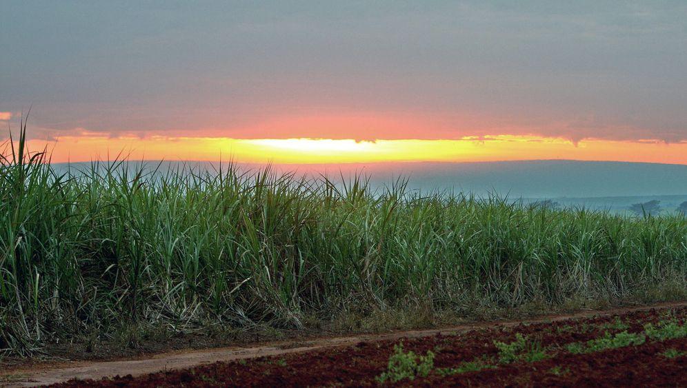 Brasiliens Agrosprit: Siegeszug unter dem Zuckerhut