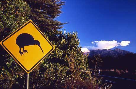 Die Kiwis, wie sie sich selbst gern nennen - nach einer neuseeländischen Vogelart, nicht nach den Früchten - , mögen es nicht, am großen Nachbarn Australien gemessen zu werden.